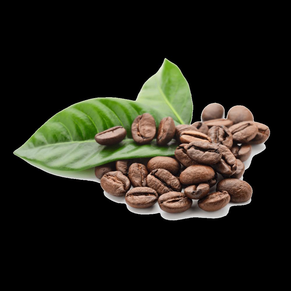 cafe de especialidad en mexico euforia | Café de Especialidad en México, sus beneficios y dónde comprarlo