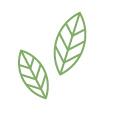 orgánico | Matcha Japonés